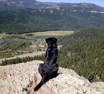 Dog overlooking the valley