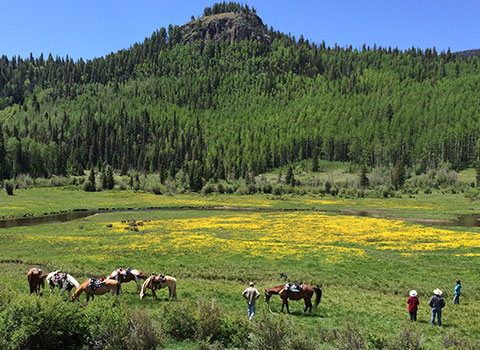 Horse Riding through a meadow in a mountainous valley